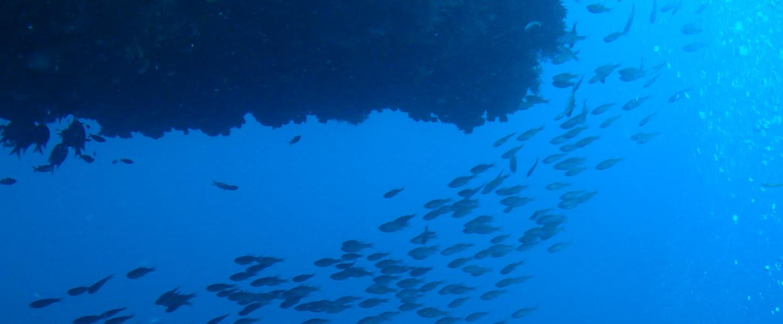ダイビング -Diving-